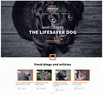 splash_home_animals